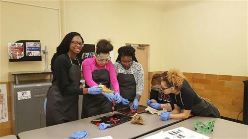 Students dissecting rats for Biology